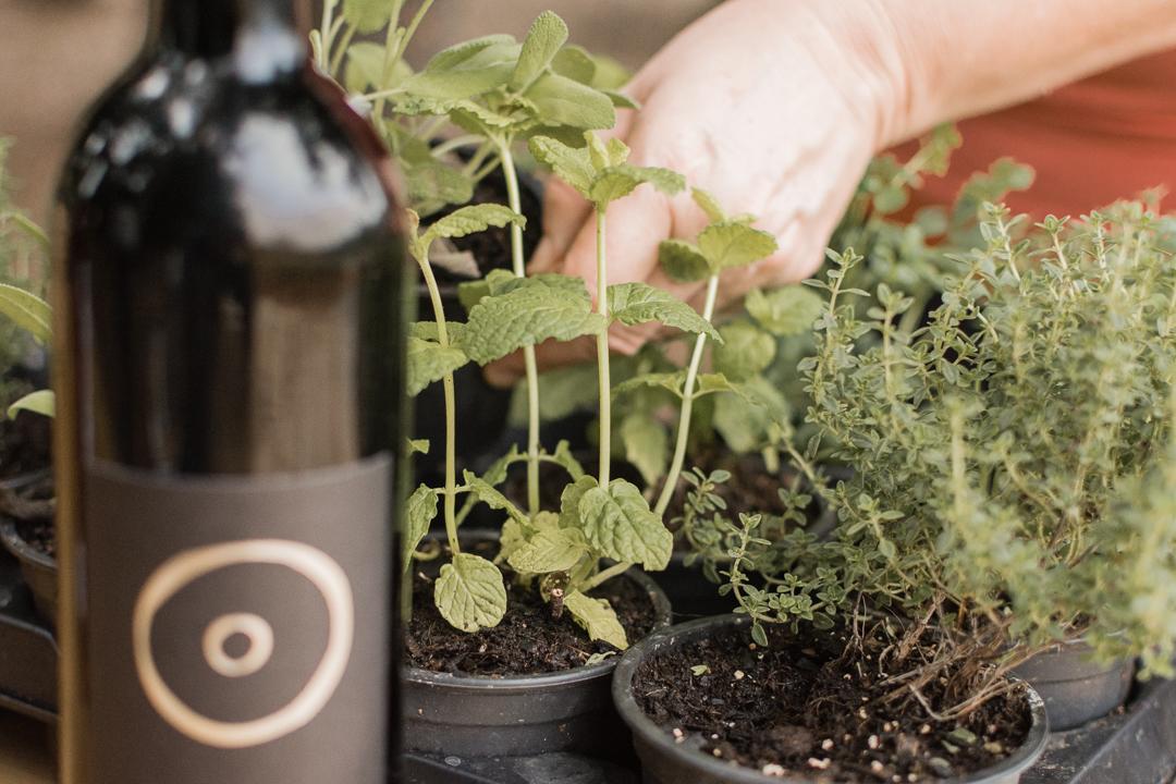 Maridaje plantas comestibles - Celler Can Roda