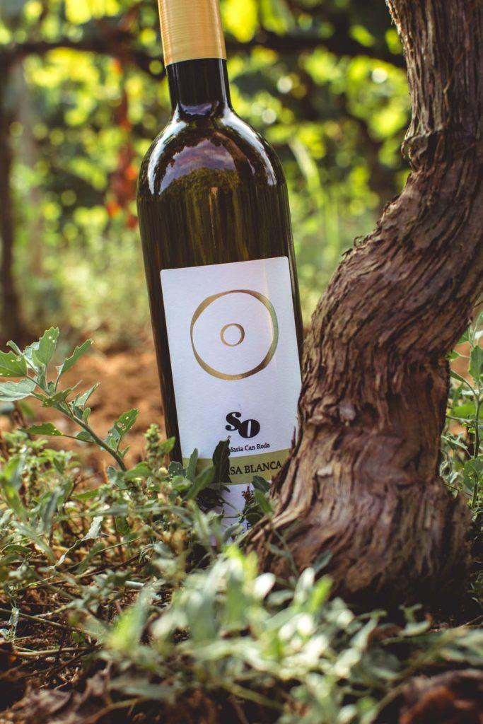 so masia can roda vi blanc pansa blanca vi ecologic do alella