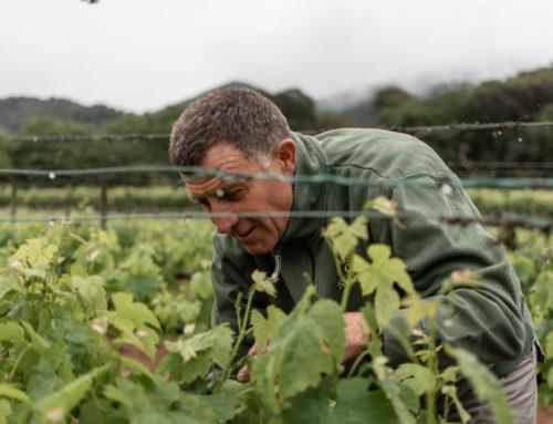 Entrevista a Ramón Berge, agricultor de Can Roda
